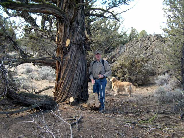 ... Old Growth Juniper Trees From A Designated Wilderness Study Area, For  Purposes Of Sale To The Juniper Furniture And Architectural Wood Business.
