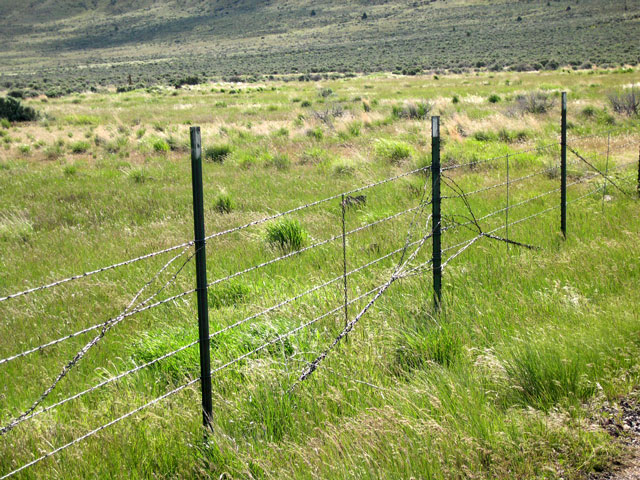Pulling Barbed Wire Fence At The Hart Mountain Antelope